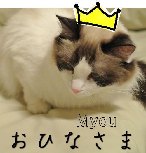 20130303myou01