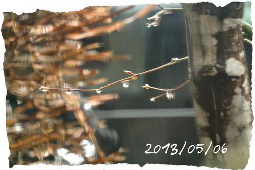20130506rain2