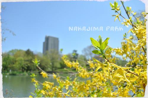 20130526nakajimapark6
