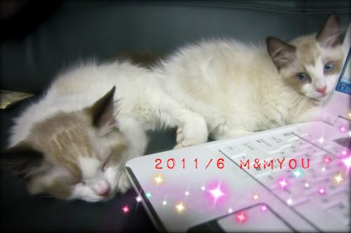 201106_09mmyou0