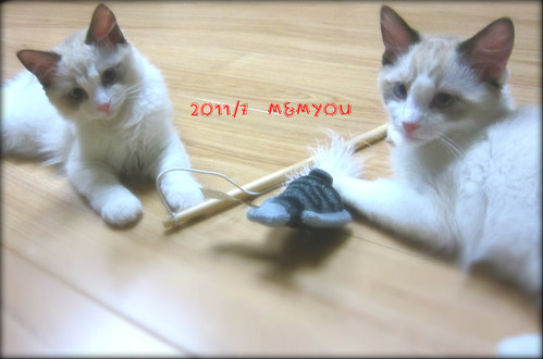 201107mmyou02