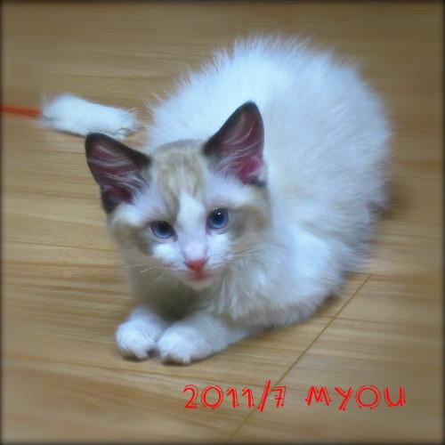 201107myou03