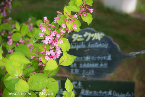 20140608asahiyama3315