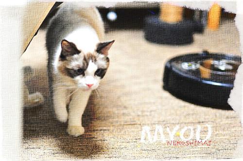 20161106myou01