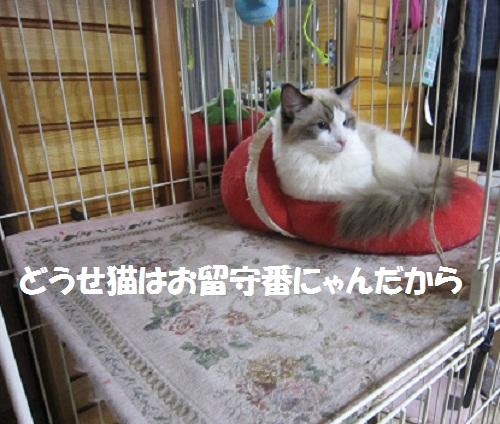 2011120810myou