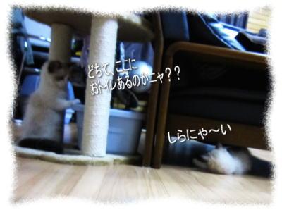 2011122201mmyou