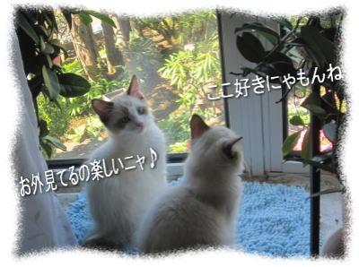 2011122202mmyou_4