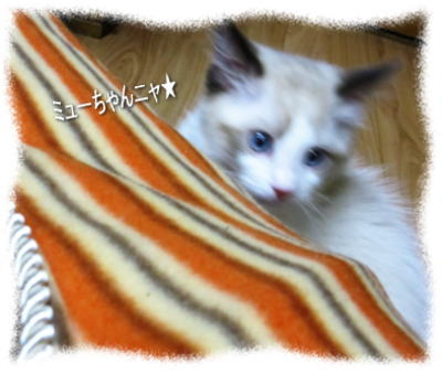 2011122204myou