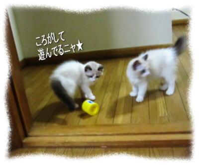 2011122205mmyou