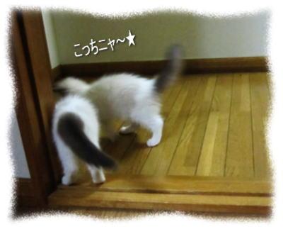 2011122206mmyou