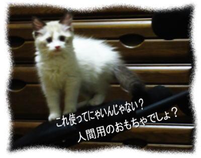 2011122207myou