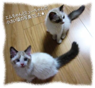 2011122209mmyou_2