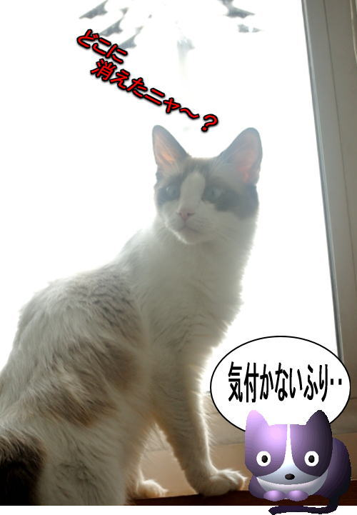 20120702myou4