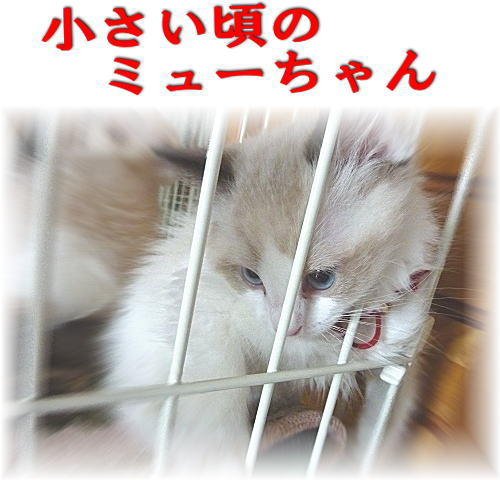20110524mmyou11