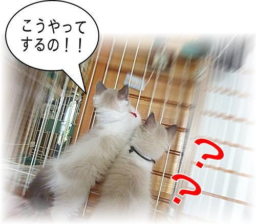 20110524mmyou44