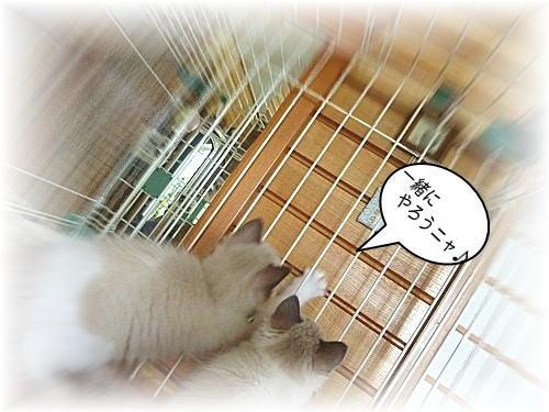 20110524mmyou66