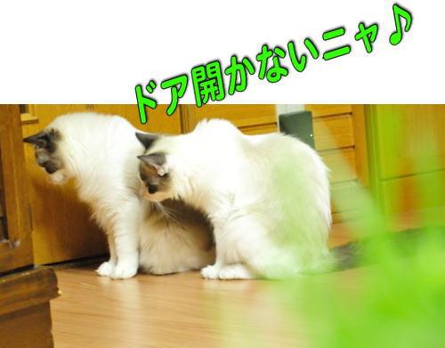 20121109mmyou1